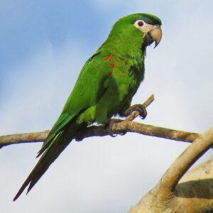 Parrots Online USA